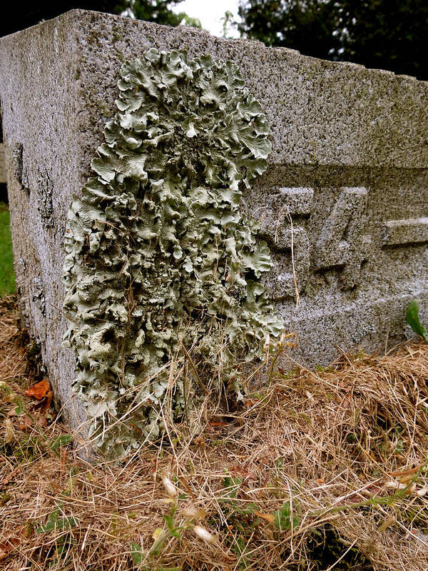 Lichen Art Print featuring the photograph Life In Death by Azthet Photography