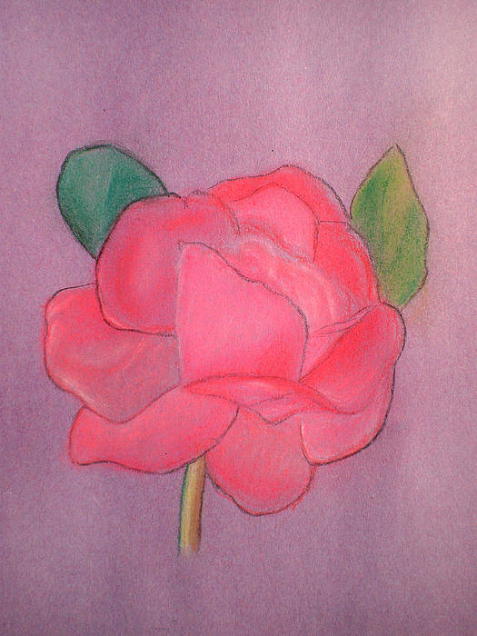 Rose Art Print featuring the pastel Mary's Rose by Gareth Tanner
