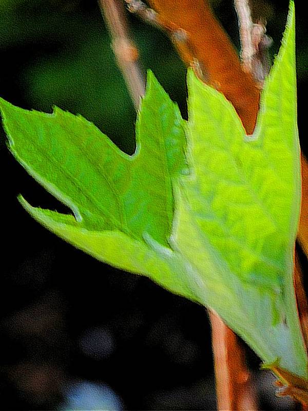 New Growth Two Art Print featuring the photograph New Growth Two by Beth Akerman