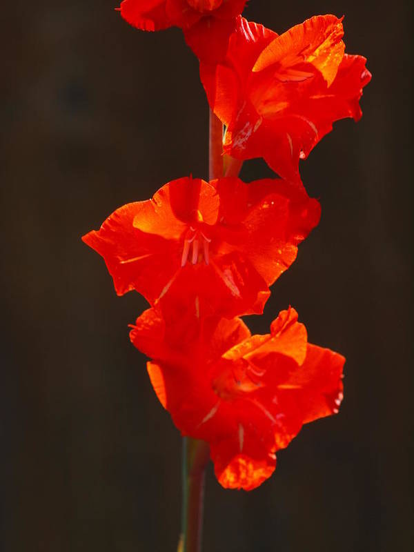 Flower Art Print featuring the photograph Orange Fire by Jim Moore