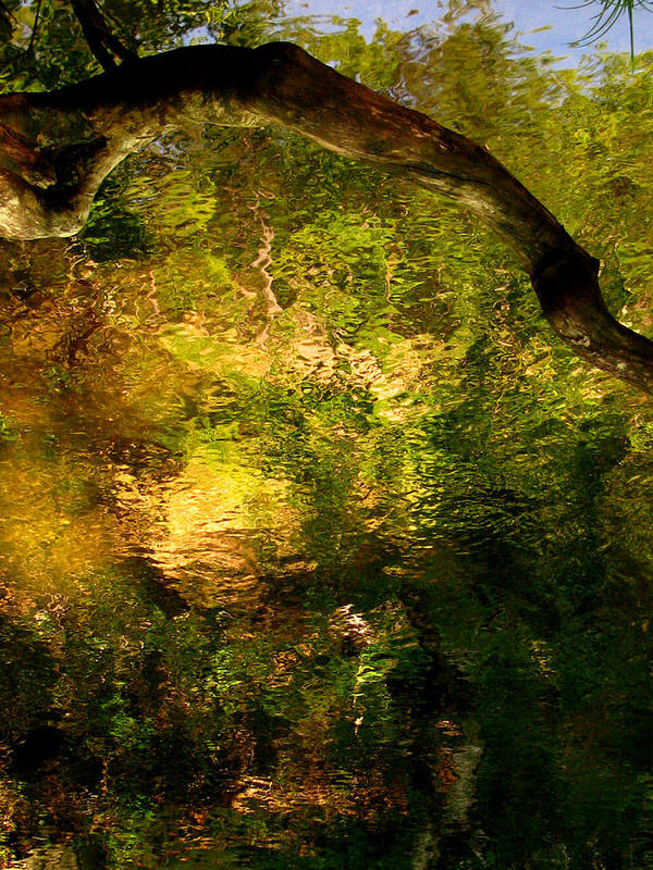 Art Print featuring the photograph Painted Forest by Eyefool Photos Brett Klersfeld