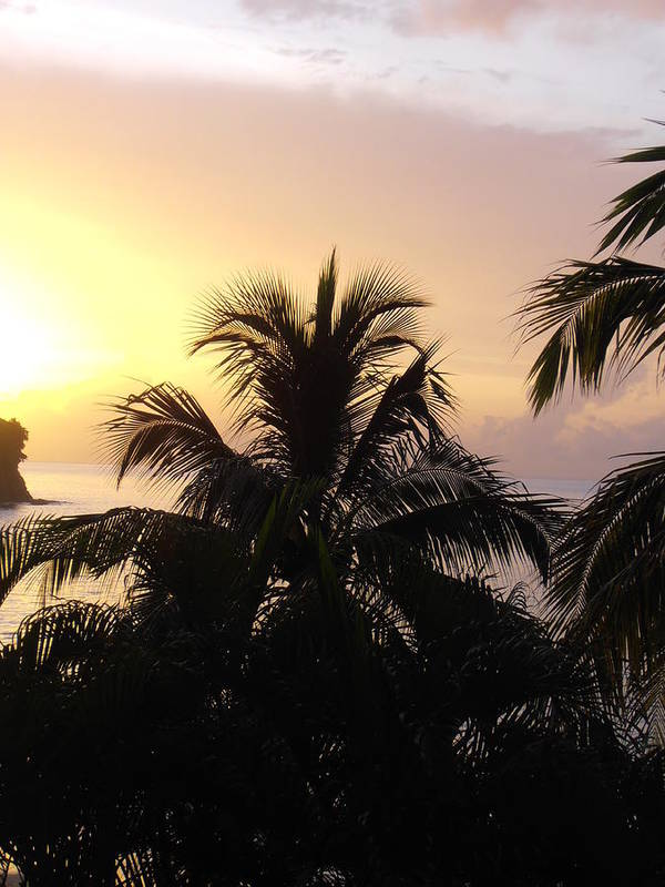 Sunset Art Print featuring the photograph Purple Palm Tree Sunset by Kimberly Perry