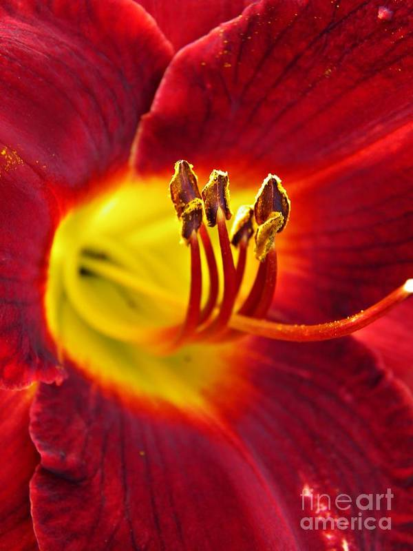 Red Lily Center 3 Art Print featuring the photograph Red Lily Center 3 by Sarah Loft