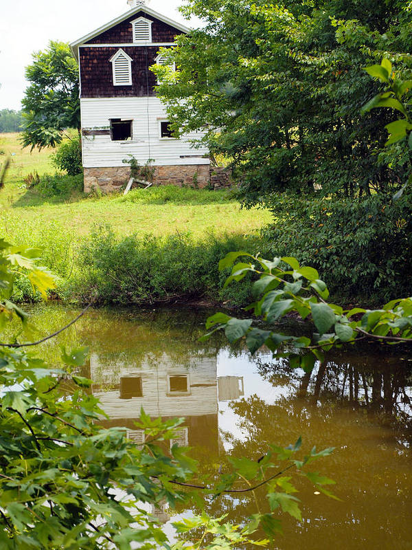 Farm Animals Art Print featuring the photograph Reflection Of The Barn by Robert Margetts
