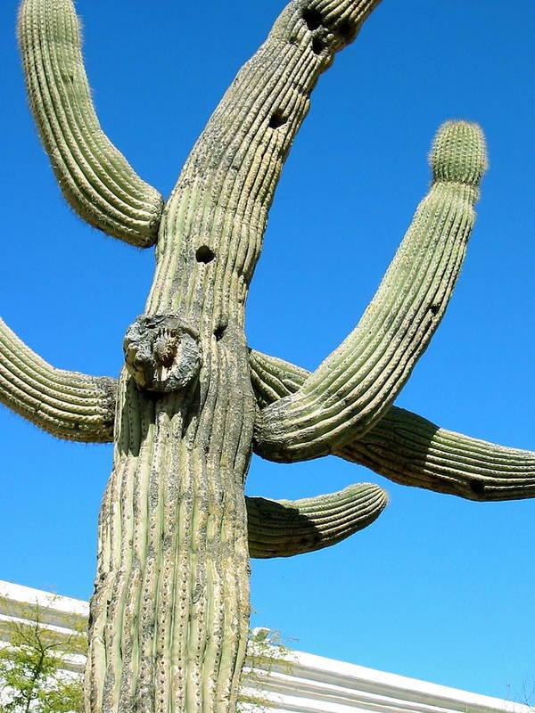 Photograph Of Saguaro Cactus Art Print featuring the photograph Saguaro by Sarah Gayle Carter