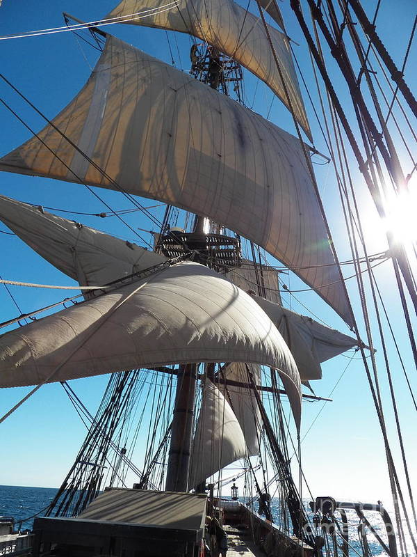 Hms Bounty Under Sail In Maine Art Print featuring the photograph Sails And Sunshine by L Jaye Bell