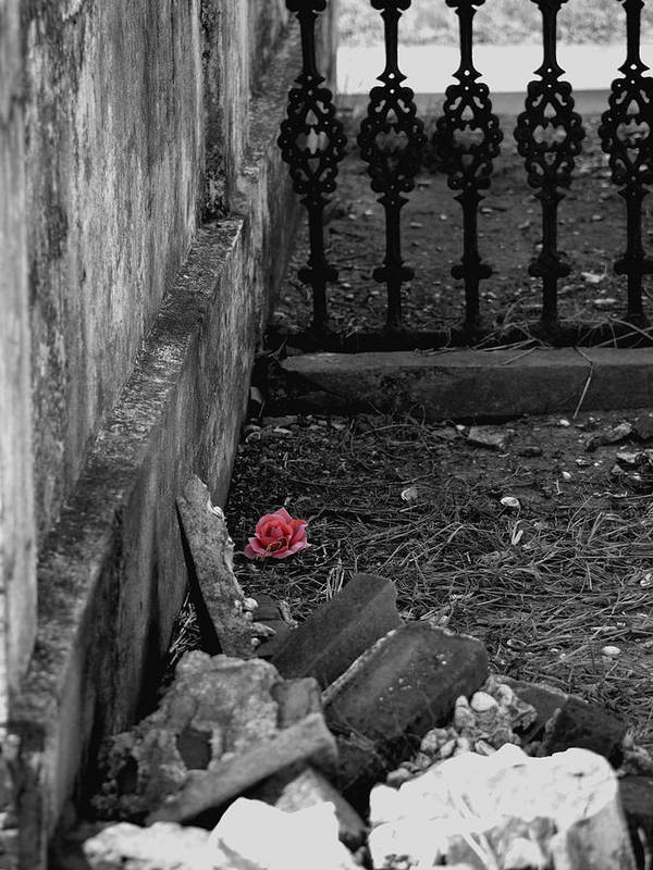 Rose Art Print featuring the photograph Solitary Rose by Renee Barnes