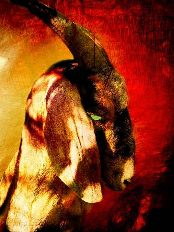 Goat Art Print featuring the photograph Son Of Perdition by Leah Moore