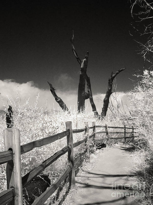 Infrared Art Print featuring the photograph Stonewall Peak-five Years After by Eileen Mandell