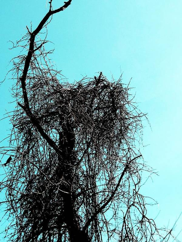 Trees Art Print featuring the photograph Tangled Up In Blue by Andrea Dale
