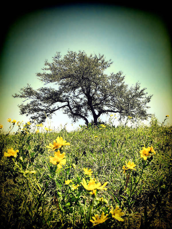Lone Tree Art Print featuring the photograph That Tree by Rick Wicker