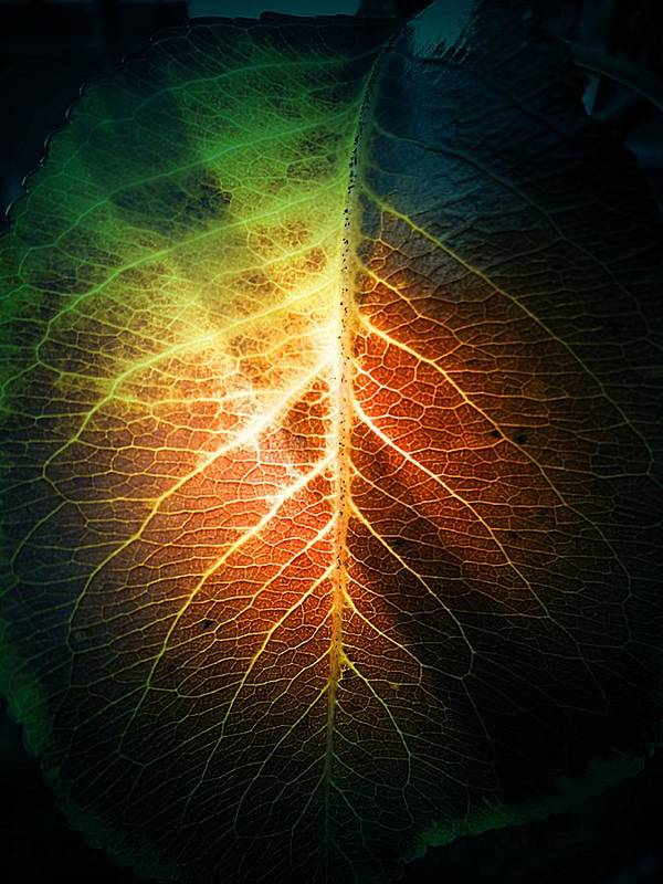 The Intense Leaf Art Print featuring the photograph The Intense Leaf by Beth Akerman