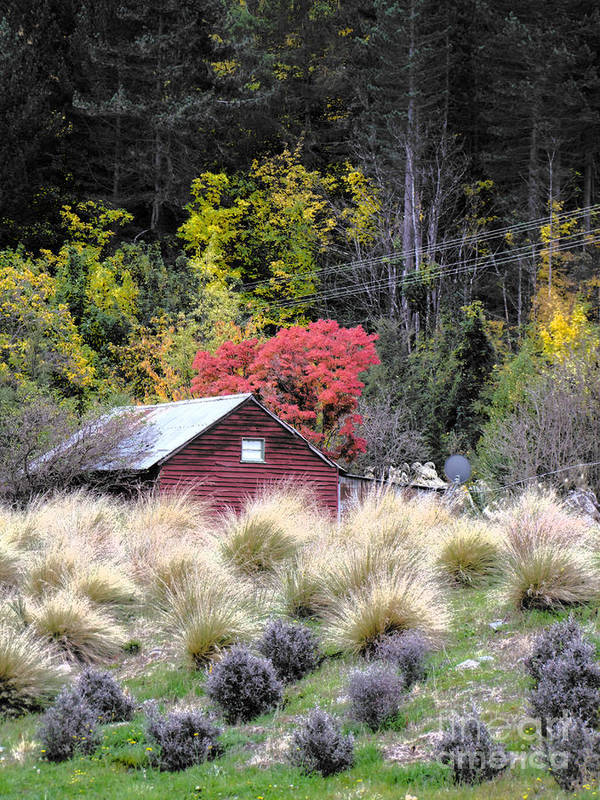 Shed Art Print featuring the photograph The Red Shed by Karen Lewis