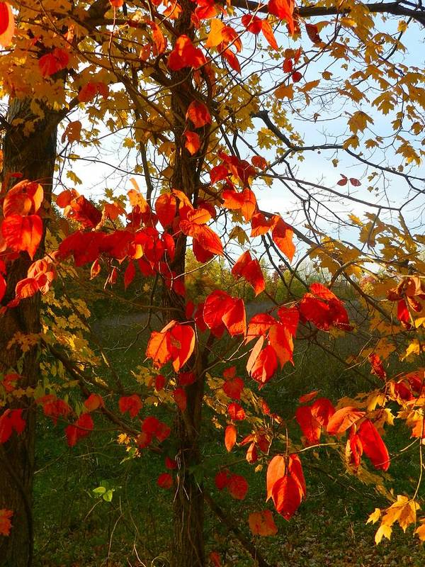 Autumn Art Print featuring the photograph The Reds Of Autumn by Julie Dant