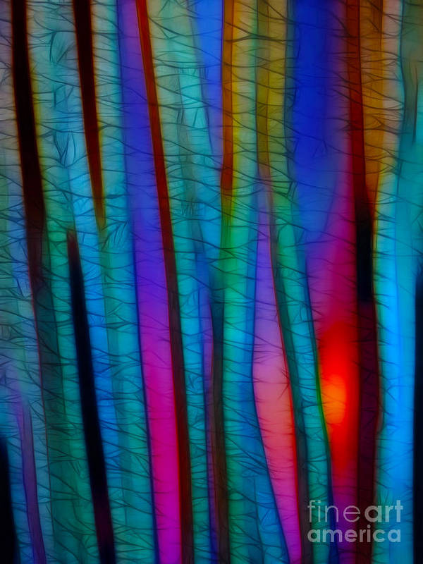 Trees Art Print featuring the photograph Through The Trees by Judi Bagwell
