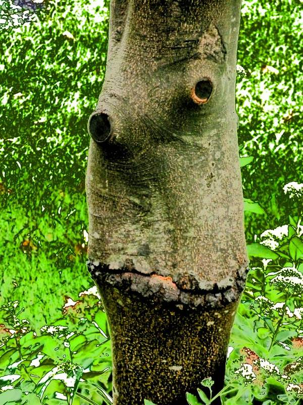 Tree Face Art Print featuring the photograph Tree Face by Beth Akerman