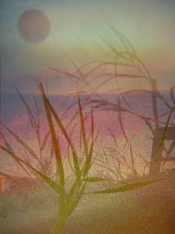 Scenery Art Print featuring the photograph Windswept by Shirley Sirois