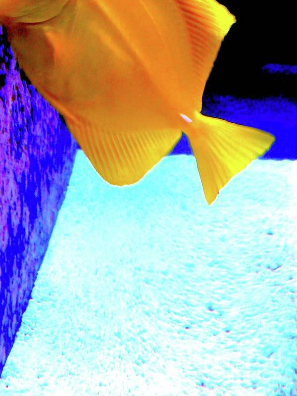 Digital Art Art Print featuring the digital art Yellow Fish Bot 2 by Nina Kaye