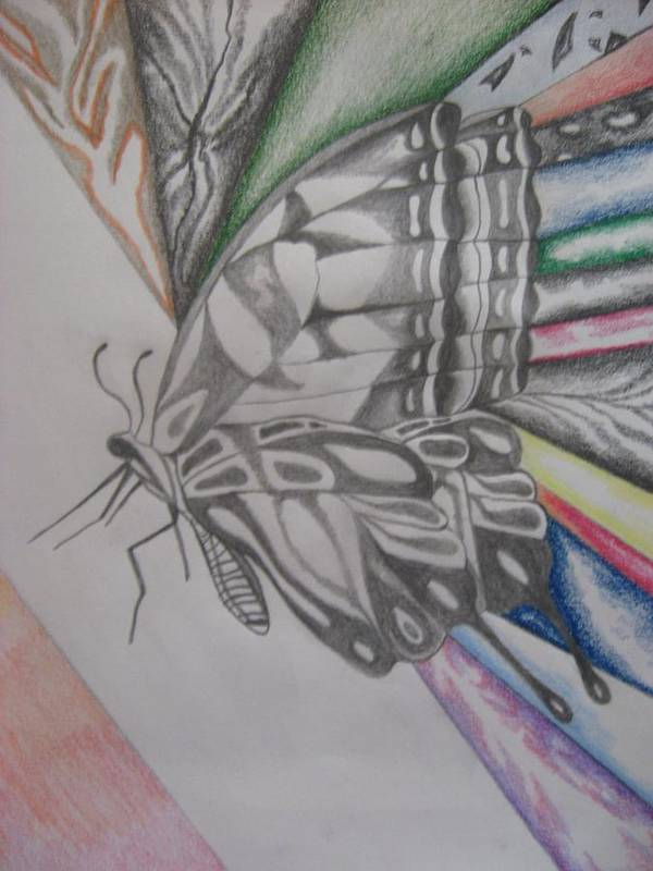 Butterfly Art Print featuring the drawing Butterfly Light by Theodora Dimitrijevic