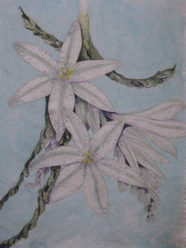 Flowers Art Print featuring the painting Desert Lillie by David Kelly