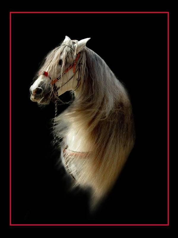 Horse Art Print featuring the photograph Glamour Shot by Richard Gordon