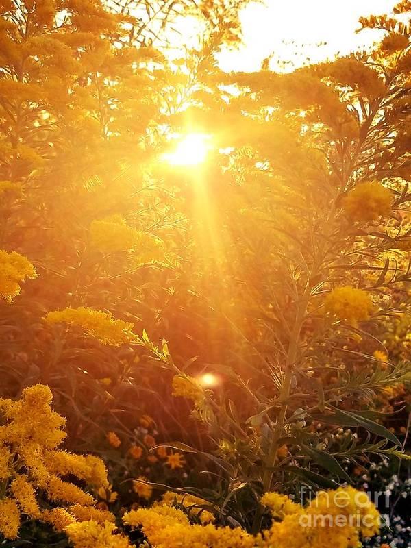 Golden Days Of Autumn Art Print featuring the photograph Golden Days Of Autumn by Maria Urso