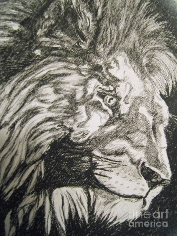 Animal Pencil Drawing Art Print featuring the drawing Oh You Think So by Nancy Rucker