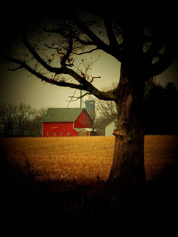 Tree Art Print featuring the photograph Tree And Barn by Michael L Kimble