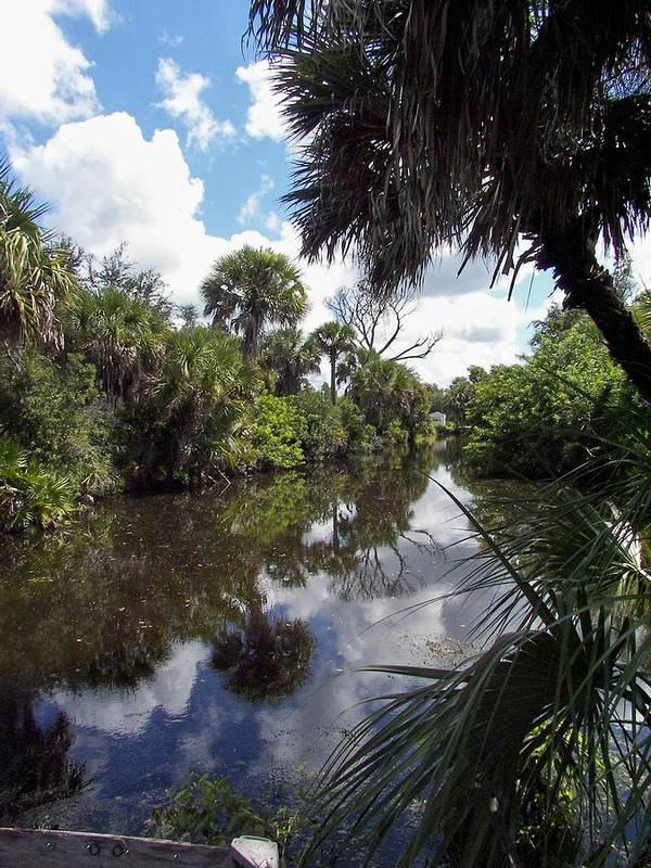 Florida Art Print featuring the photograph a little bit of Florida by Charles Peck