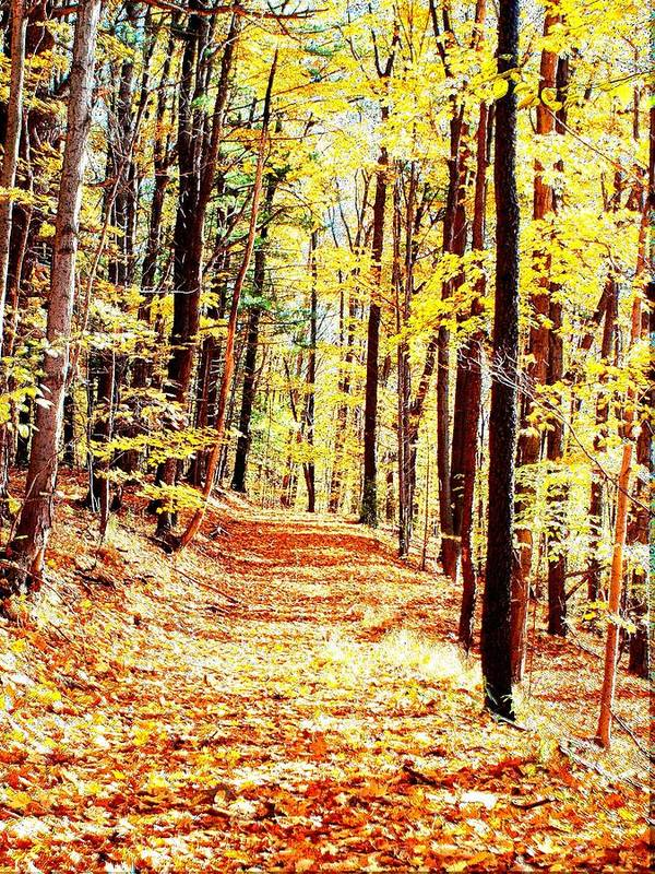 Autumn Art Print featuring the photograph A Yellow Wood by Joshua House