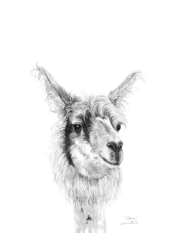 Llama Art Art Print featuring the drawing Adam by K Llamas