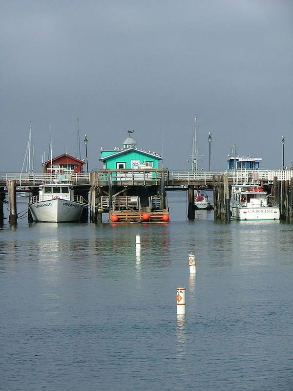 Sea Scapes Art Print featuring the photograph Again In Monterey by Donna Thomas