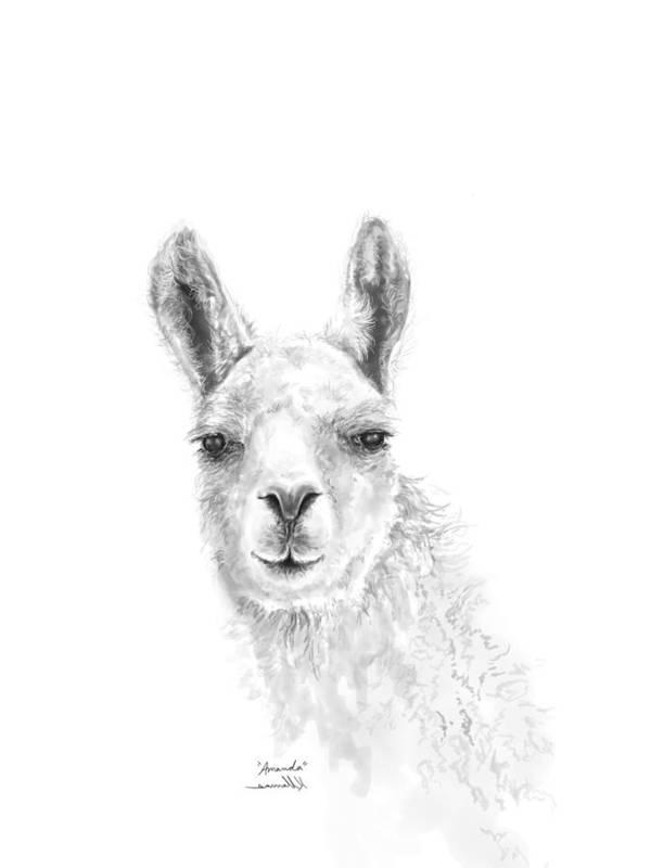 Llama Art Art Print featuring the drawing Amanda by K Llamas