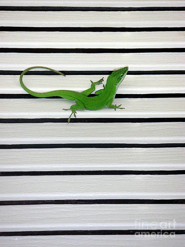 Nature Art Print featuring the photograph Anole Shuttered Out by Lucyna A M Green