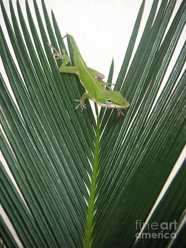Nature Art Print featuring the photograph Anole With Palm - Assertive by Lucyna A M Green