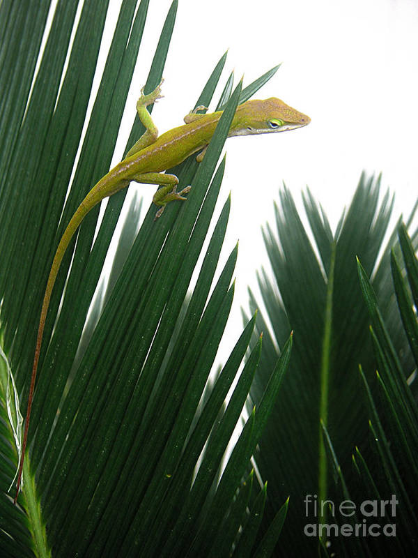 Nature Art Print featuring the photograph Anole With Palm - Flexible by Lucyna A M Green