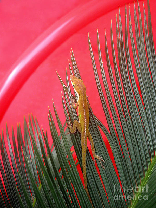 Nature Art Print featuring the photograph Anole With Palm - In The Red by Lucyna A M Green