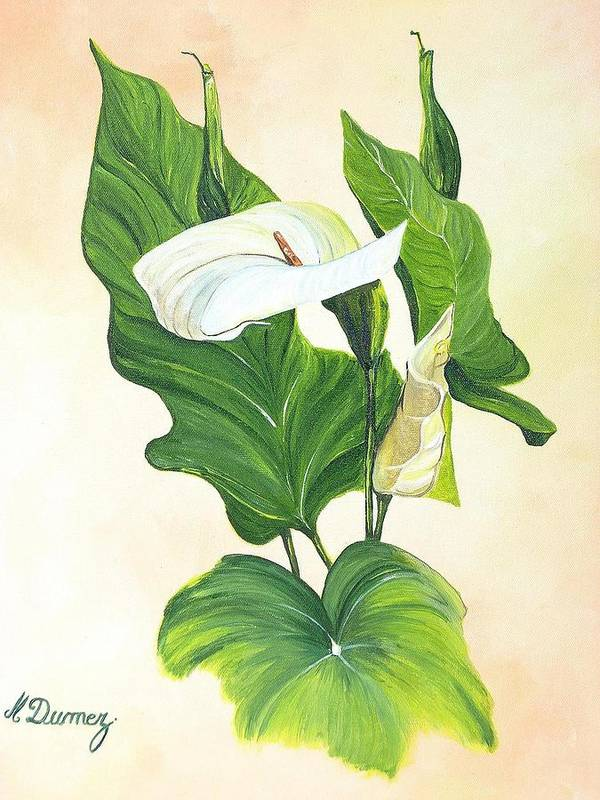 Flowers Art Print featuring the painting Arums by Murielle Hebert