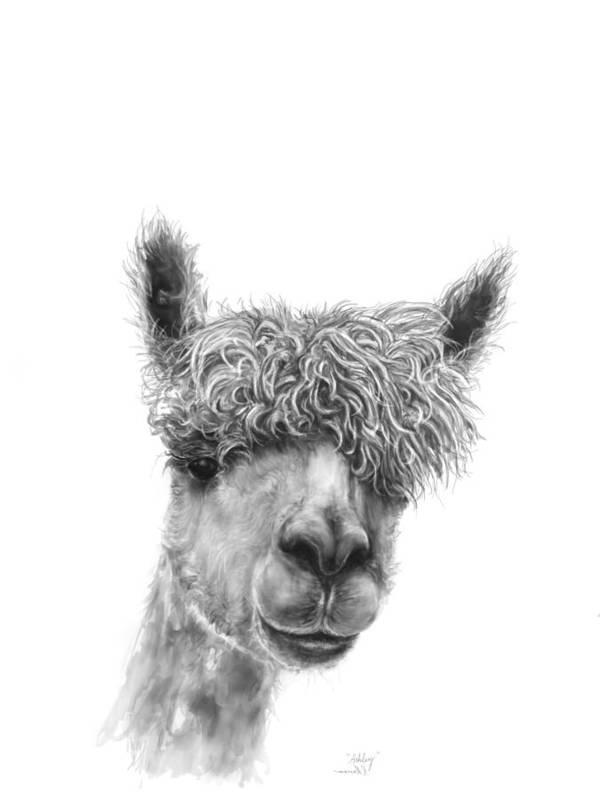 Llama Art Art Print featuring the drawing Ashley by K Llamas
