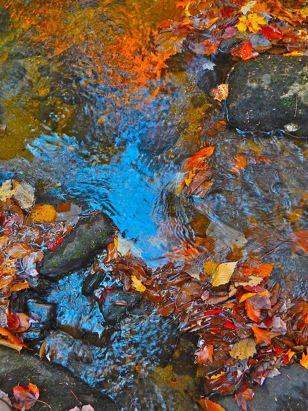 Nature Art Print featuring the photograph Autumn 2015 115 by George Ramos