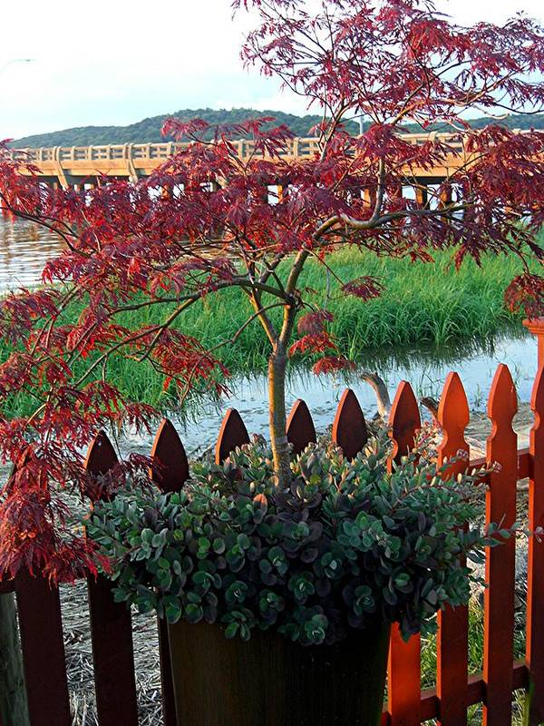Art Print featuring the photograph Autumn Bridge by Caroline Urbania Naeem