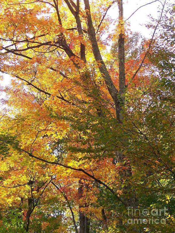 Autumn Art Print featuring the photograph Autumn's Gold - Photograph by Jackie Mueller-Jones