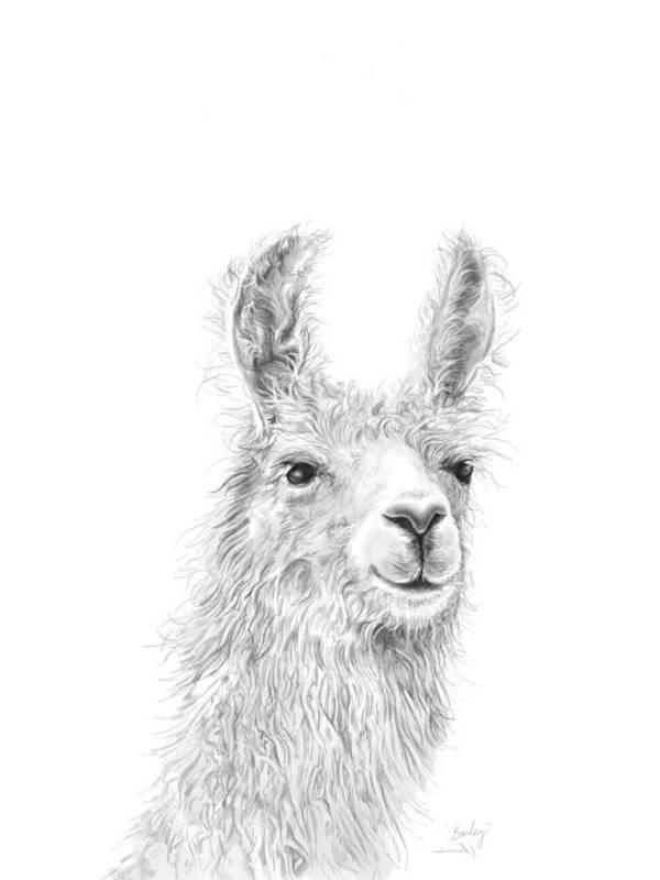 Llama Art Art Print featuring the drawing Bailey by K Llamas