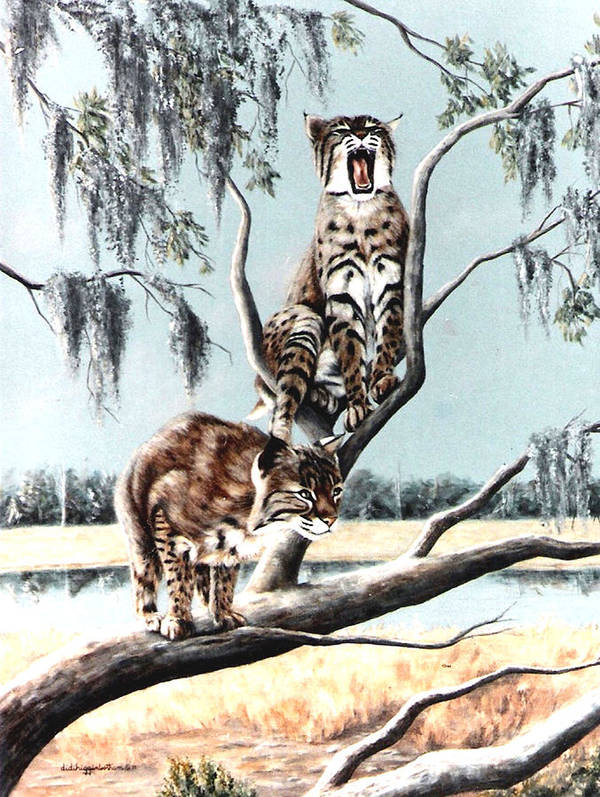 Bobcats Art Print featuring the painting Bayou Bobcats by DiDi Higginbotham