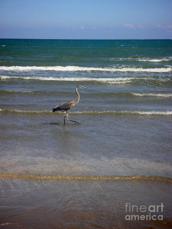 Nature Art Print featuring the photograph Being One With The Gulf - In Step by Lucyna A M Green