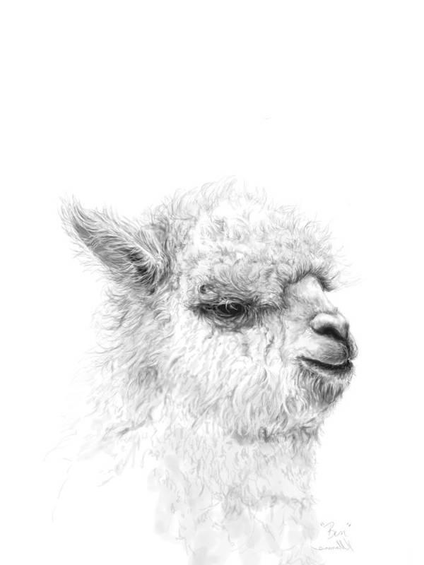 Llama Art Art Print featuring the drawing Ben by K Llamas