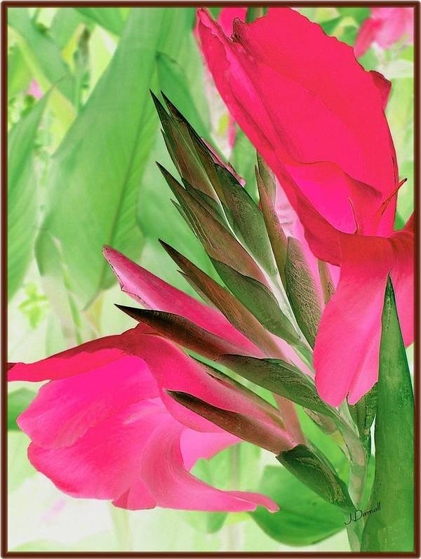 Flower Art Print featuring the digital art Bird Of Paradise 2 by Jim Darnall