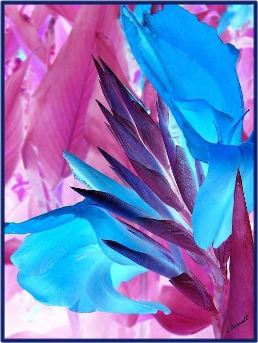 Flower Art Print featuring the photograph Bird Of Paradise by Jim Darnall