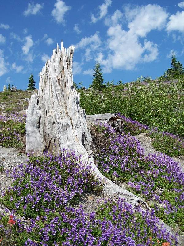 Tree Stump Art Print featuring the photograph Blue Lupine by Gene Ritchhart