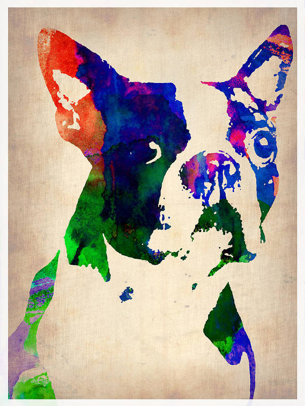 Boston Terrier Print featuring the painting Boston Terrier Watercolor by Naxart Studio